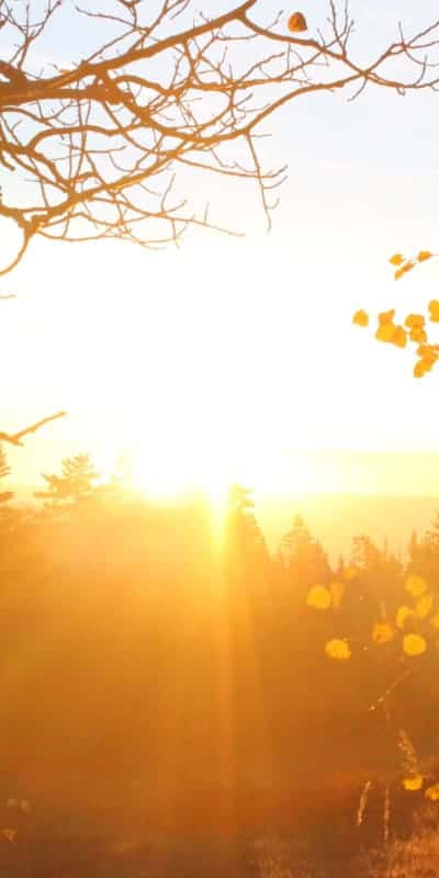Sunshine On Cedar Shingles 400X800 1